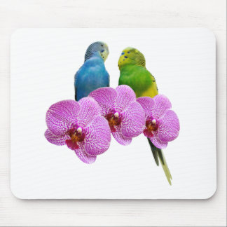 Budgie with Purple Orchid Mouse Pad