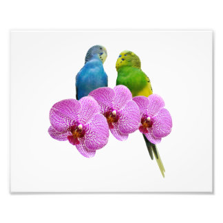 Budgie with Purple Orchid Photo Print