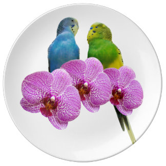 Budgie with Purple Orchid Plate