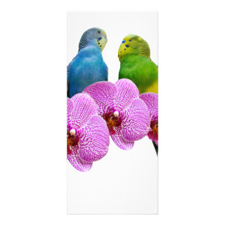 Budgie with Purple Orchid Rack Card