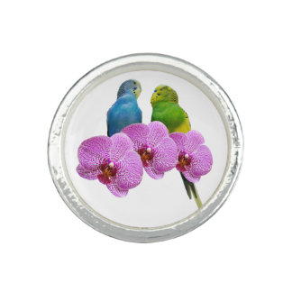 Budgie with Purple Orchid Ring