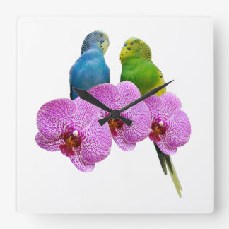 Budgie with Purple Orchid Square Wall Clock