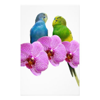 Budgie with Purple Orchid Stationery