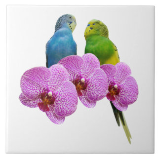 Budgie with Purple Orchid Tile