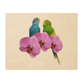 Budgie with Purple Orchid Wood Print