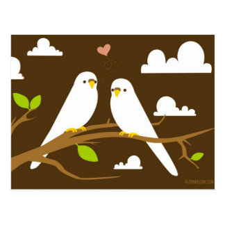 Budgies Postcard