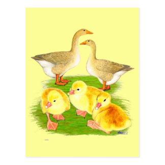 Buff Goose Family Postcard