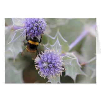 Buff-tailed bumblebee greetings card