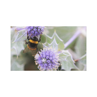 Buff-tailed bumblebee on sea holly canvas print