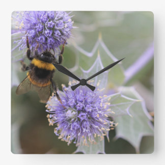 Buff-tailed bumblebee on sea holly clock