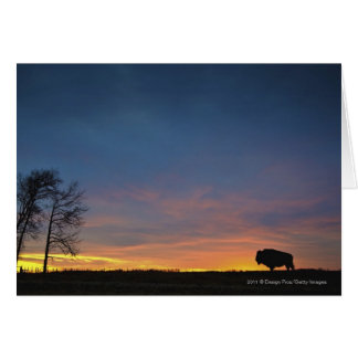 Buffalo At Sunset In Elk Island National Park Greeting Card