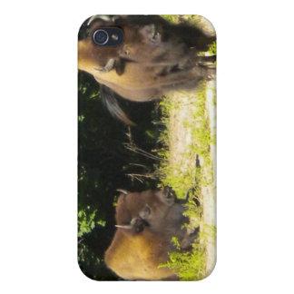 Buffalo/Bison iPhone 4 case