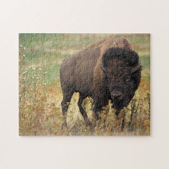 Buffalo Bison Jigsaw Puzzle