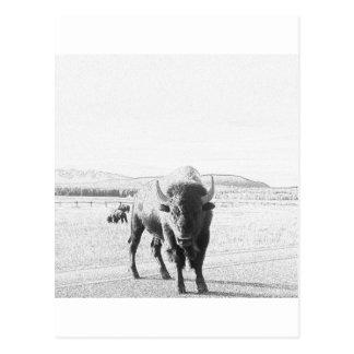 Buffalo Bison Postcard