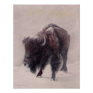 Buffalo Blizzard print