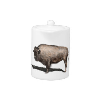 Buffalo, Bubalus