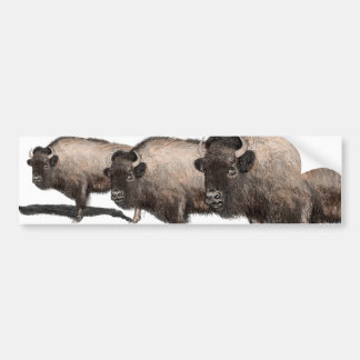 Buffalo, Bubalus Bumper Sticker