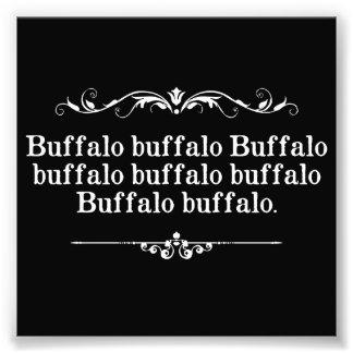 Buffalo Buffalo Sentence Photographic Print