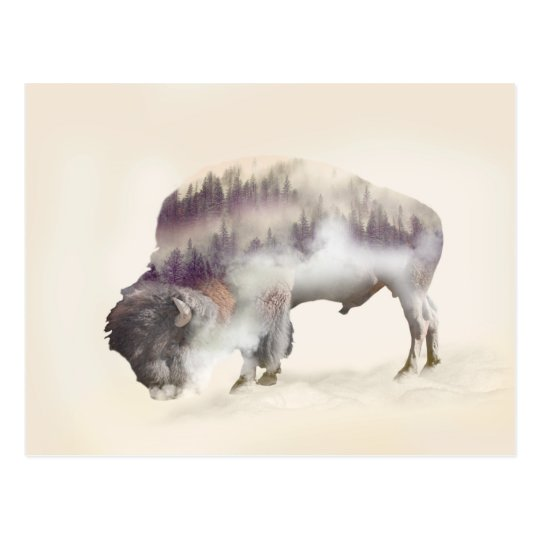 Buffalo-double exposure-american buffalo-landscape postcard