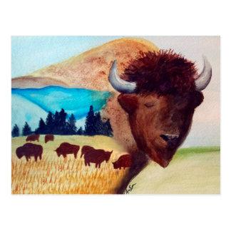 Buffalo Dream Postcard
