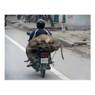 Buffalo on Motorbike-Vietnam Postcard