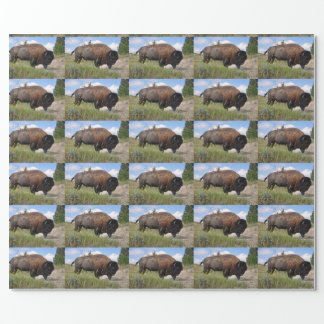 Buffalo on sunny day wrapping paper