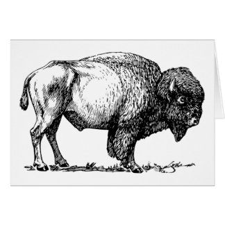 Buffalo or Bison greeting card