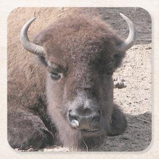 Buffalo Photo Square Paper Coaster