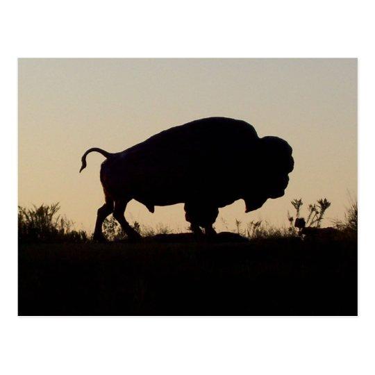 Buffalo Silhouette Postcard