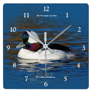 Bufflehead Drake at the Pond Square Wall Clock