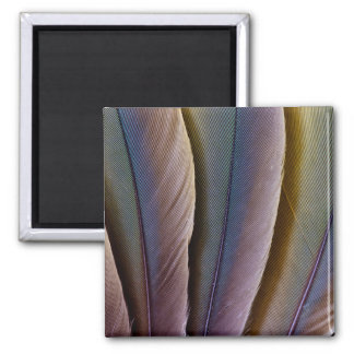 Buffon'S Macaw Feather Design Magnet
