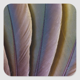 Buffon'S Macaw Feather Design Square Sticker
