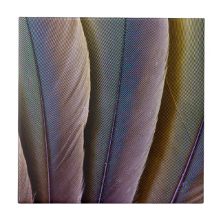 Buffon'S Macaw Feather Design Tile