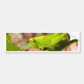 bug insect   in  the  nature bumper sticker