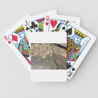 Bug on Flower Bicycle Playing Cards