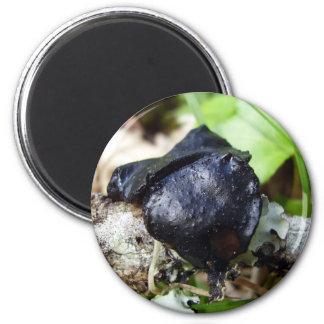 Bulgaria inquinans Fungi Magnet