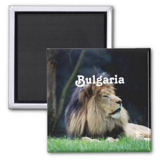 Bulgaria Lion Square Magnet