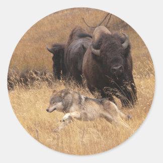 Bull Bison, Female, & Wolf Classic Round Sticker