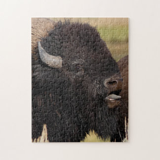 bull bison grunting jigsaw puzzle
