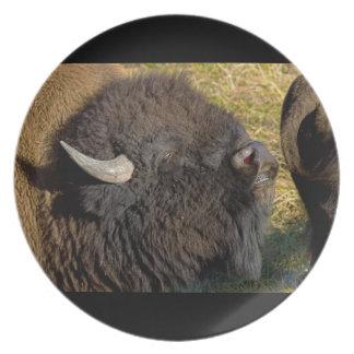 Bull bison plates