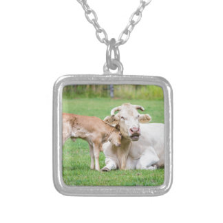 Bull calf loves mother cow in meadow silver plated necklace