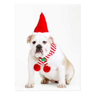 Bull Dog Elf Postcard