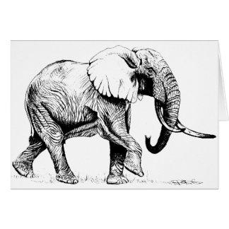 Bull Elephant Study Birthday Card