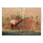 Bull Elk Bugle Card