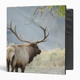 Bull Elk, Cervus canadensis, in the Binder