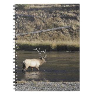 Bull Elk Crossing Madison River, Yellowstone 2 Note Books