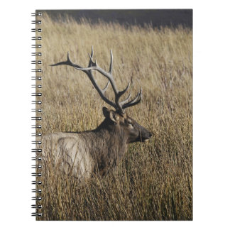 Bull Elk Crossing Madison River, Yellowstone Spiral Note Books