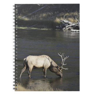 Bull Elk Drinking from Madison River Note Books