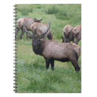 Bull Elk & Herd Spiral Notebooks
