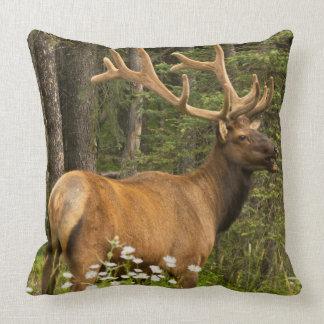 Bull elk in velvet, Canada Throw Pillow